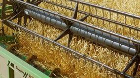联合收割机在农田会集麦子庄稼 影视素材