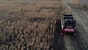 联合收割机在好日子会集麦子 股票视频