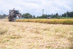联合收割机机器收割稻 免版税库存图片