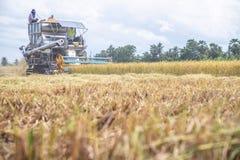 联合收割机机器收割稻 免版税库存照片