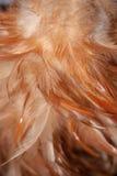 联合的羽毛 免版税库存图片