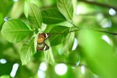 联接的蝴蝶 库存照片