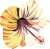 聪慧的美好的招标使可爱的热带夏威夷花卉夏天热带浅粉红色和黄色木槿无缝的i复杂 向量例证