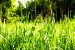 聪慧的草绿色富有 库存图片