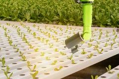 聪明机器人在农业未来派概念,机器人农夫自动化在垂直或室内f必须编程工作 免版税库存照片