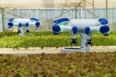 聪明机器人在农业未来派概念,机器人农夫自动化在垂直或室内f必须编程工作 库存照片