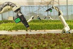 聪明机器人在农业未来派概念,机器人农夫自动化必须编程工作喷洒化学制品,施肥 库存照片