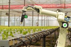 聪明机器人在农业未来派概念,机器人农夫自动化必须编程工作喷洒化学制品,施肥 库存图片