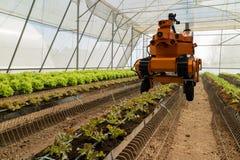 聪明机器人在农业未来派概念,机器人农夫自动化必须编程工作喷洒化学制品,施肥 免版税库存图片