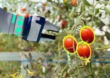 聪明机器人在农业未来派概念,机器人农夫自动化必须编程工作收菜和fr 免版税图库摄影