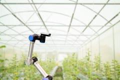 聪明机器人在农业概念,机器人农夫自动化 免版税库存图片