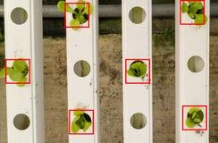 聪明的农业未来派概念,看见机器人编程运作收集菜和f的农夫自动化 免版税库存图片