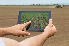 聪明的农业 使用片剂玉米种植的农夫 现代Agr 免版税库存图片