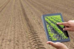 聪明的农业 使用片剂玉米种植的农夫 现代Agr 免版税库存照片