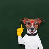 聪明的学校狗 免版税库存图片
