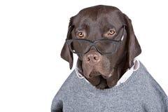 聪明的查找的狗 库存图片