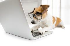 聪明的狗与个人计算机一起使用 库存照片