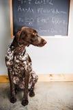聪明的狗 图库摄影