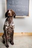 聪明的狗 库存照片