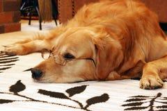 聪明的狗 免版税图库摄影