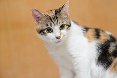 聪明的猫 免版税库存图片