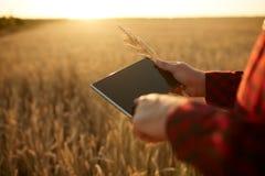 聪明种田使用在农业的现代技术 供以人员有数字式片剂计算机的农艺师农夫在麦子 库存照片