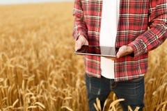 聪明种田使用在农业的现代技术 供以人员有数字式片剂计算机的农艺师农夫在麦子 免版税库存图片