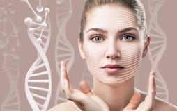 肉欲的妇女画象在脱氧核糖核酸链子中的 库存图片