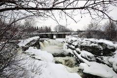 肉猪的返回在渥太华,加拿大落在冬天 库存图片