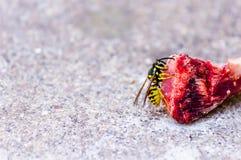 肉的蜂上面 库存照片