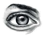 肉眼手凹道葡萄酒在丝毫隔绝的剪贴美术解剖学  向量例证