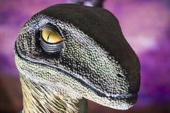 肉食鸟恐龙现实模型  免版税库存照片
