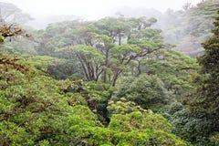 肋前缘森林雨rica 免版税库存图片