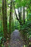 肋前缘森林雨rica 图库摄影
