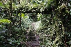 肋前缘热带雨林的rica 免版税库存图片