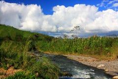 肋前缘monteverde rica河 图库摄影