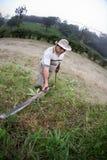 肋前缘rican现有量的大农场 免版税库存图片