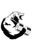 肌肉北美灰熊训练 免版税图库摄影
