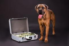 肌肉家谱狗和手提箱有美元的 库存照片
