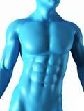 肌肉抽象的机体 皇族释放例证
