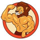 肌肉狮子摆在 库存照片
