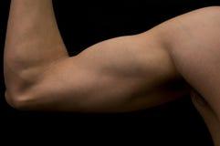 肌肉的胳膊 免版税库存图片