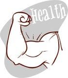 肌肉胳膊,强的二头肌传染媒介例证 免版税图库摄影