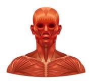 肌肉面孔 免版税库存照片