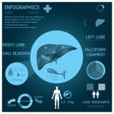 肝脏Infographic Infocharts 免版税库存图片