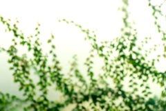 肢体分支绿色叶子的模糊的照片 库存照片