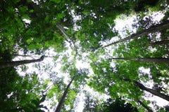 肤色浅黑的意大利人森林 免版税库存图片