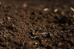 肥沃一个被犁的领域的特写镜头,黑土壤 免版税库存图片