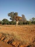 肥沃土壤 图库摄影