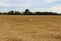 肥皂泡和大黄色麦田在整理以后和阴沉的天空在背景中 免版税库存照片